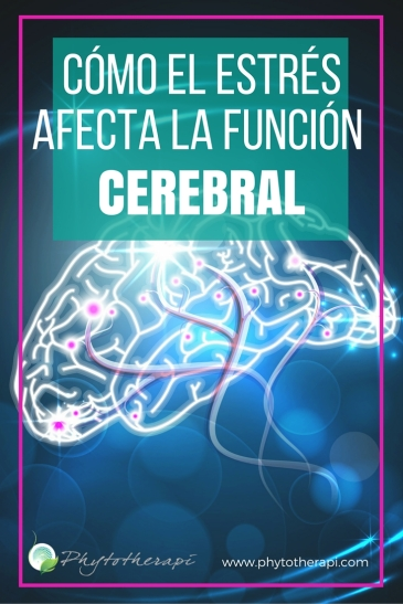 How StressAffects Brain Function-SPANISH